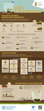 FAO-Infographic-IYS2015-fs3-en