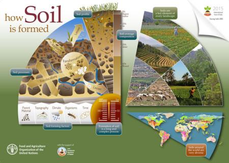 FAO-Infographic-IYS2015-soilformation-en